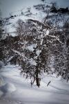 Et tre. Bildet er tatt av Yngve Nordskag.